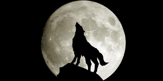 Hurler-avec-les-loups